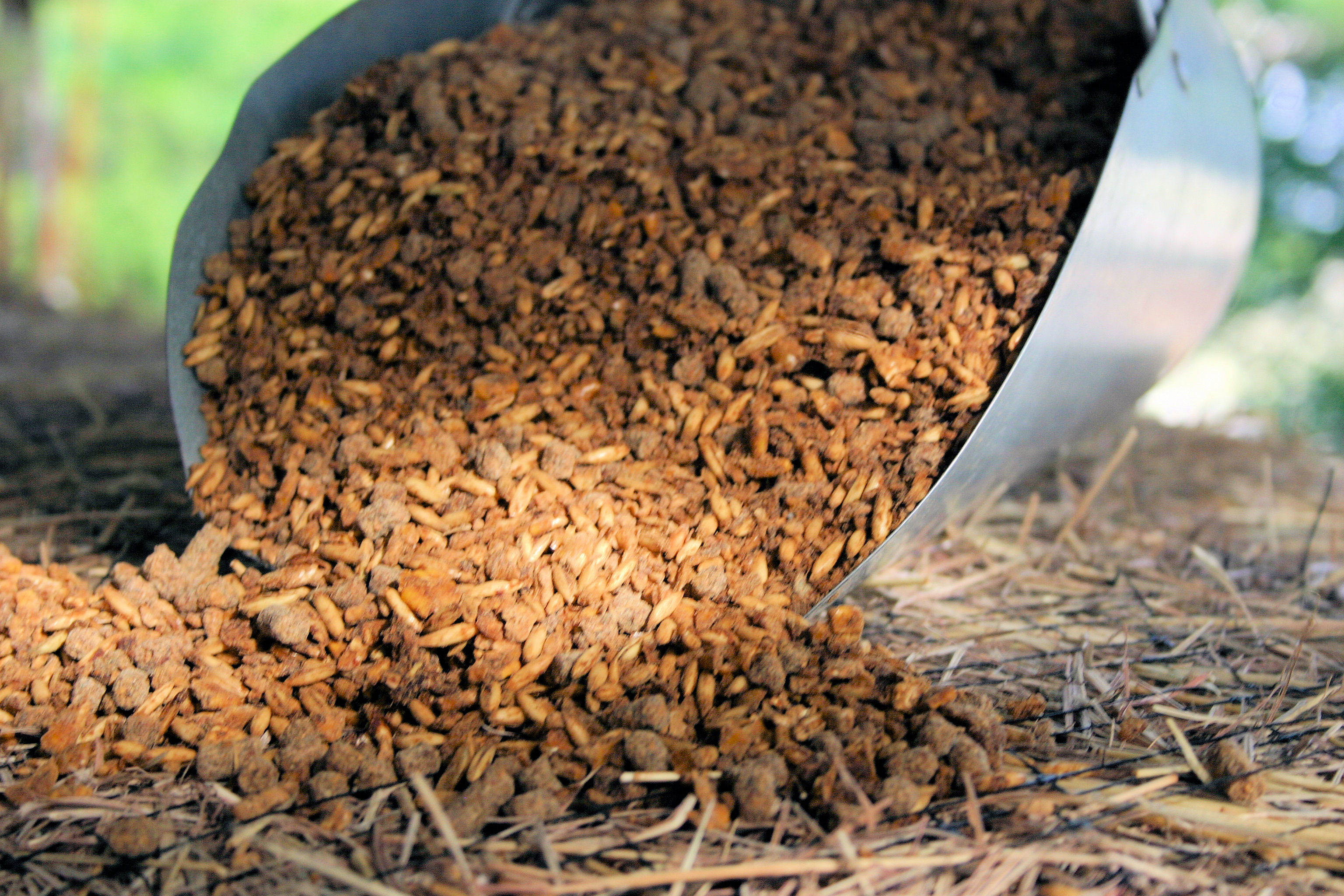 Horse feed and supplements